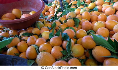 Woman selecting oranges - Lady is choosing orange fruits...