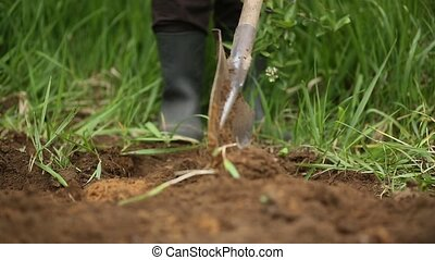 Digging spring soil with shovel.