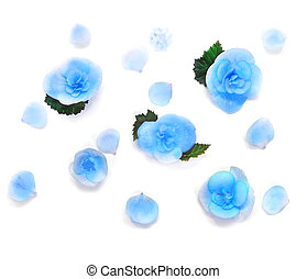 Various Blue Flowers Isolated on White Background