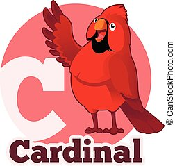 ABC Cartoon Cardinal - Vector image of the ABC Cartoon...