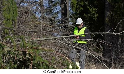 Lumberjack using tablet PC at the pile of branches