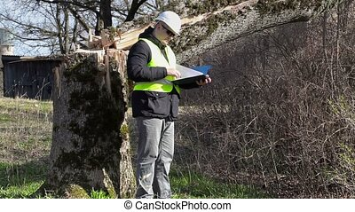 Worker with checking documentation near fallen tree