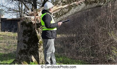 Worker with documentation checked fallen tree