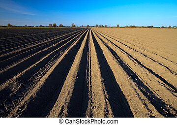 Cultivated potato field in spring time - Cultivated new...