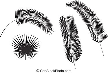 Set of palm tree leaves silhouettes isolated on white background.