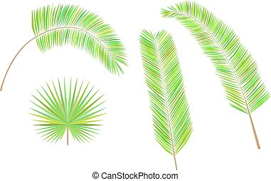 Set of colorful palm leaves.