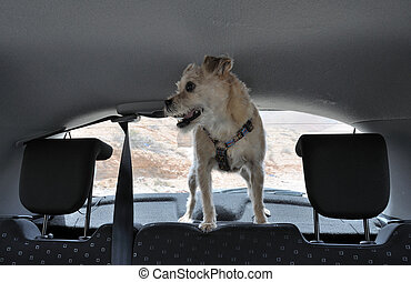 Dog inside of a car