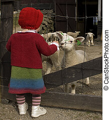 Small girl in woolen clothes looking at the lambs