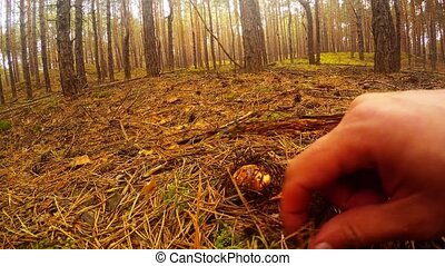 search for mushrooms in the forest under the moss - Hands...