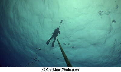 Divers ascend from depth seabed along the ropes - Divers...
