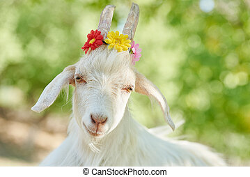 white goat with flowers