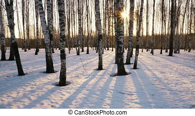 Sunset in the winter forest - Time lapse shoot of sunset in...