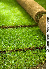 Turf grass rolls partially unrolled revealing a fresh green...