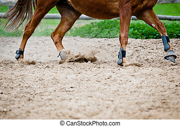 horse galloping in paddock