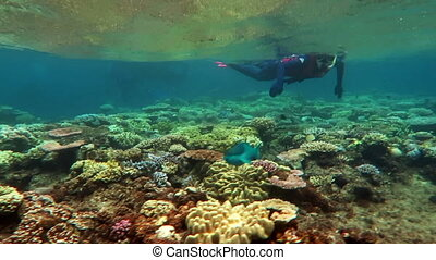 Tropical Queensland - Woman snorkeling in coral sea great...