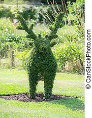 Deer topiary in garden - Green deer topiary at spring time...