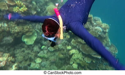 Woman snorkeling great barrier reef - Woman snorkeling in...