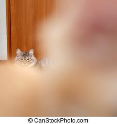 nariz, enojado, gato