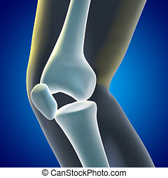 Knee Xray - A Medical illustration of a knee xray showing...
