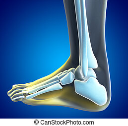 Foot Pain - An illustration of a foot xray with a red spot...