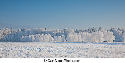 Winter landscape with trees snow wrapped against blue...