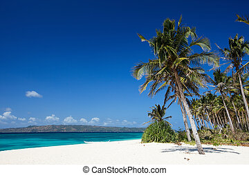 Perfect beach - Perfect tropical white sand beach with palm...
