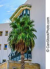 Date palm near white buidling in Hammamet Tunisia