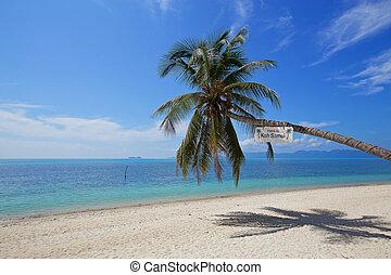 beautiful tropical beach white sand coconut tree with blue sky on samui island