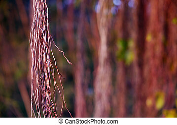 brown tree vines in the rainforest - brown tree vines and...