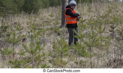 Forest officer numbering at pine young growth