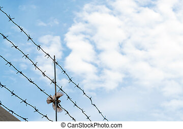 Barbed wire on blue sky with bird flying across wire,...