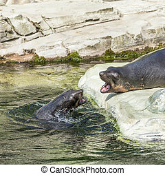 two male seal fighting in the ocean on a sunny day
