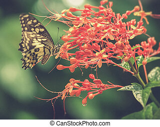 Butterfly on a flower Vintage filter effect used