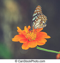 Butterfly on a Mexican Sunflower Vintage filter effect used...
