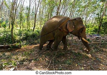 puxando, elefante, árvore, tronco