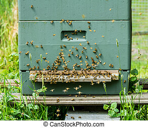 European honey bees on a hive - European honey bees swarming...
