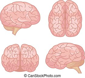 Human brain Vector flat cartoon set