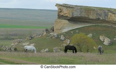 Three Horses Grazing Near Rock
