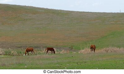 Small Group Of Horses Grazing On Field