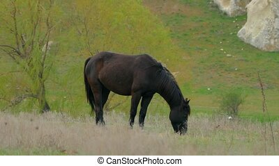 One Black Horse On Grass At Pasture - One black horse...