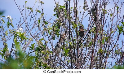 flock of sparrows perched on the branches of trees against...