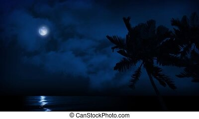 Palms By Ocean At Night
