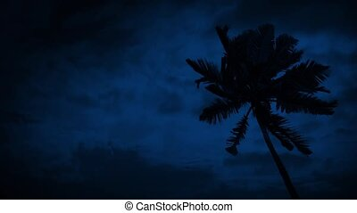 Palm Tree On Windy Night - Palm tree in strong wind at night