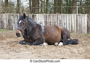 lying mare with Birth Alarm - a brown warmblood mare with...