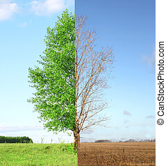 Two seasons - summer and autumn