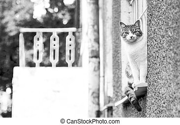 Gray-white cat outdoor - The gray-white cat sitting on a...