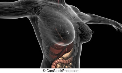 science anatomy scan of human body with digestive system