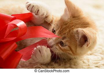 Kitten playing with gift box - Orange tabby kitten playing...