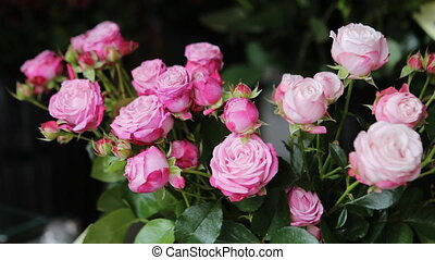 Beautiful fresh pink roses.