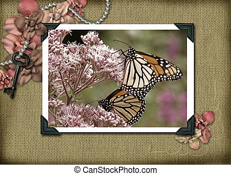 Vintage Monarchs - Monarch butteflies on wildflowers